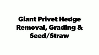 Giant Hedge Clearing & Brush Removal