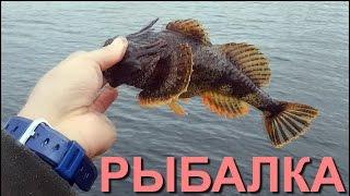 Рыбалка Камбала, Ерш, Окунь, Ловля Рыбы с Причала (Flounder and Sculpin Pier Fishing) США 2015