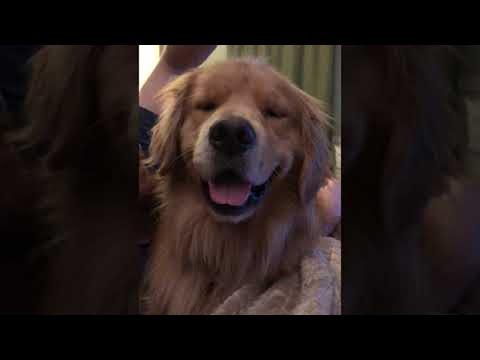 Koira nauttii rapsutuksista – Ilme kertoo kaiken!