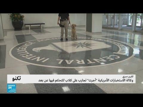 العرب اليوم - شاهد: الاستخبارات الأميركية تجري تجارب على كلاب للتحكم فيها عن بُعد