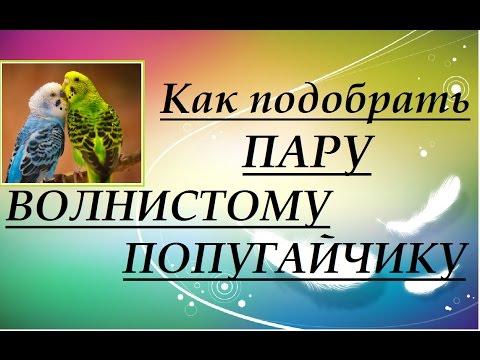 Гороскоп для девы май 2016