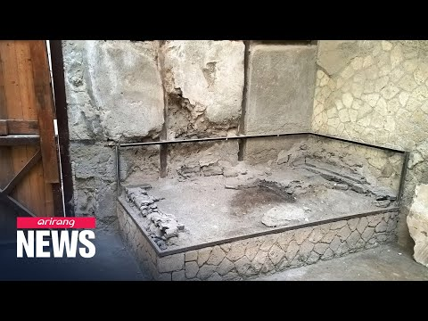 Preserved brain cells found in victim of Vesuvius eruption nearly 2,000 years ago