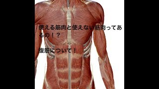 使える筋肉と使えない筋肉って何!? 腹筋について(腹筋はもともと割れている!?)