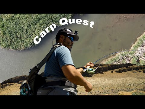 Carp Quest | Fly Fishing for Carp