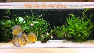 Wild Red Spotted Greens. Thanks To  黃鈺琦 (Taiwan)