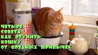Четыре совета как отучить кошку от вредных привычек