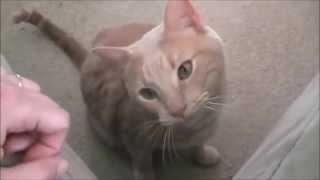 Ласковый кот просит погладить