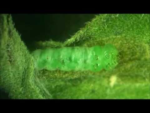 Kung ano ang sanitary papel na ginagampanan ng predators at parasites