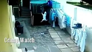 Watch Two Bull Terriers Attack Intruder