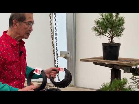 Bonsai You Can Make Yourself - Pines