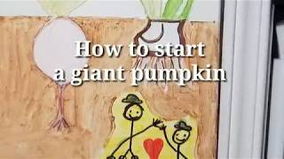 How to start a giant pumpkin seed