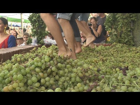 Fiesta de la vendimia de Manilva 2019