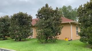Magnolia Privacy Screen/The Tree Planters