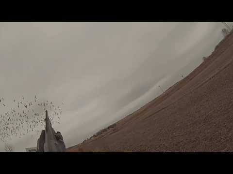 iowa-snow-goose-flock-jump-gopro