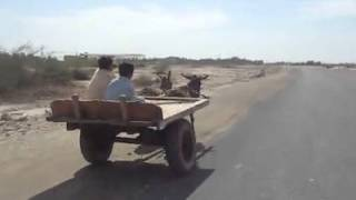 preview picture of video 'Small Kids Driving Donkey Cart'