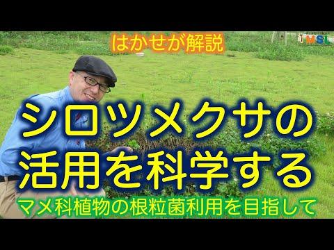 , title : 'はかせが解説「シロツメクサの活用」(マメ科植物の根粒菌利用を目指して)