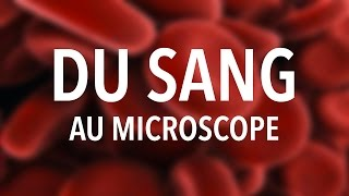 DU SANG AU MICROSCOPE ? #LME02