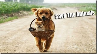 Animal Quotes | Save Animals Quotes | Animal Rights Quotes  #powerofquotes