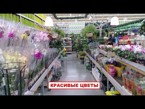Леруа Мерлен Комнатные цветы и комнатные растения. Большой обзор ассортимента цветов Leroy Merlin
