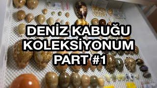 Deniz Kabuğu Koleksiyonum Part #1