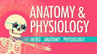 Introduction to Anatomy&Physiology: Crash Course A&P #1