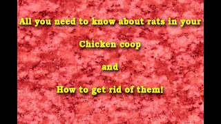 How to get rid of rats in a chicken coop. Tips & Tricks