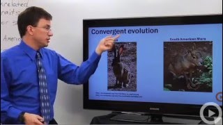 Evolution - Convergent Evolution