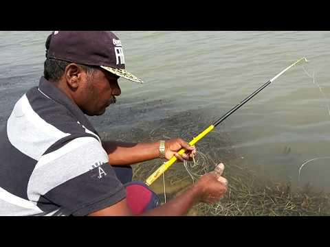 hyderabad village fishing rahu fish catching.