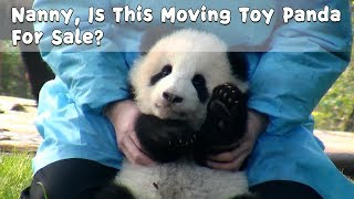 Nanny, Is This Moving Toy Panda For Sale?   iPanda