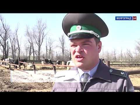 Управлением Россельхознадзора на территории Волгоградского региона проводится эпизоотический мониторинг