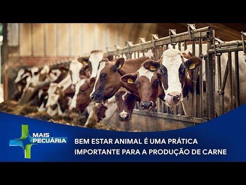Bem estar animal é importante para a produção de carne