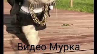 Цвет настроения ЧЁРНЫЙ! Лучшая пародия на клип Егора Крида!!!