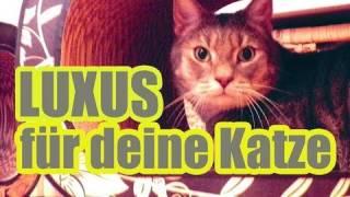 Stylishe & exklusive Kratzmöbel von Cat-on.com