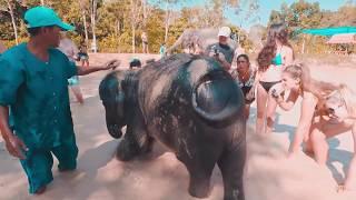 Green Elephant Sanctuary Park Thailand Phuket