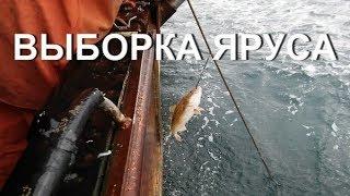 Ловля рыбы ярусом