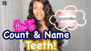 How To Count Tooth Numbers For Adults   Names of Teeth In Dentistry