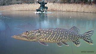 Как сделать зимняя рыбалка на жерлицы
