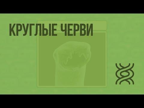 Круглые черви. Видеоурок по биологии 7 класс
