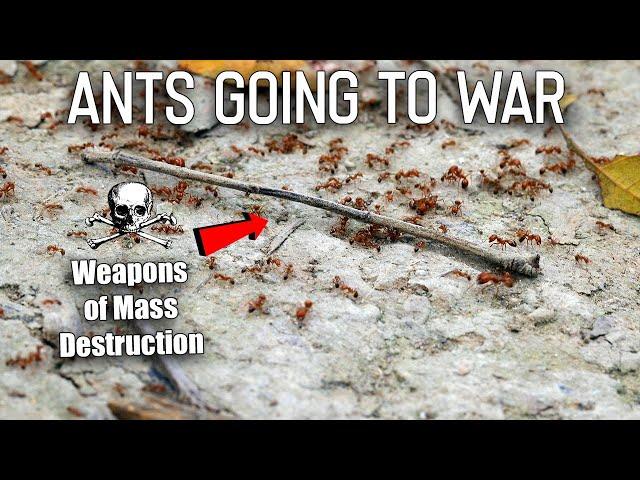 Video Pronunciation of war in English