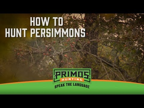 How to Hunt Persimmons for Deer video thumbnail