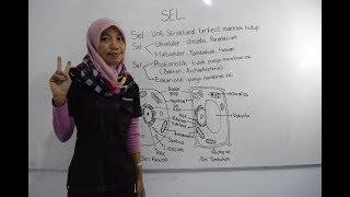 selfuzziblog: Apa Yang Dimaksud Dengan Sel Sebagai Unit ...