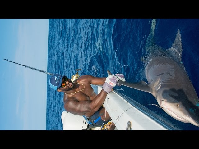 Shark Fishing with NFL Linebacker Sam Barrington - 4K