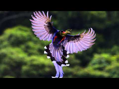 Beautiful colors of nature in birds