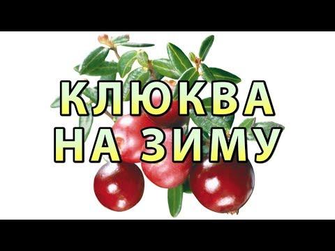 Клюква с Мёдом на Зиму Рецепт