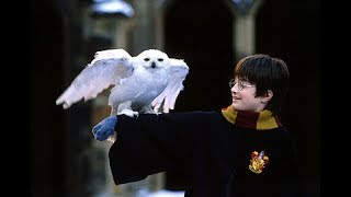 Hedwig the Snowy Owl in Harry Potter VS reality