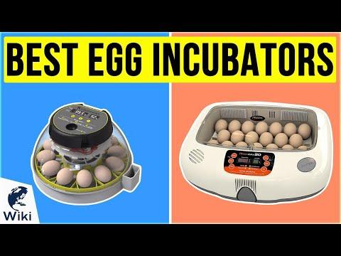 Egg Incubator Cum Hatcher