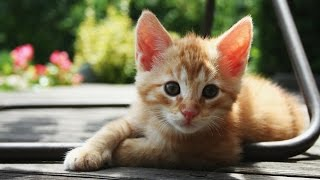 25 Foods That Are Harmful For Your Kitty