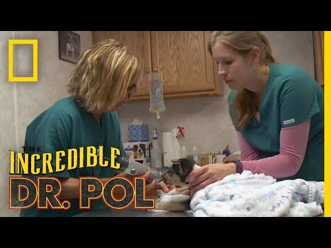What's Moo with Ewe? (Full Episode) | The Incredible Dr. Pol