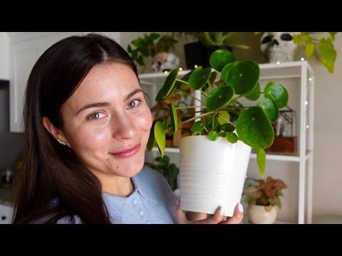 , title : 'Top Favorite Common & Affordable Houseplants! | BEST COMMON INDOOR PLANTS!