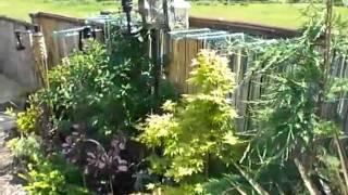 Garden 3 weeks before judging
